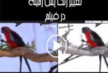 تصویر تغییر رنگ زمینه فیلم در پریمیر
